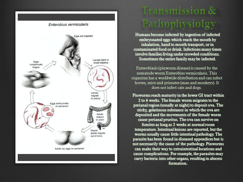 Transmission & Pathophysiolgy