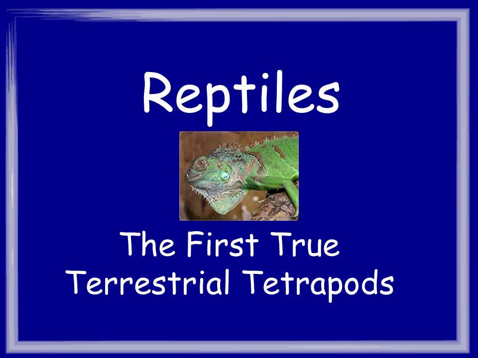 The First True Terrestrial Tetrapods
