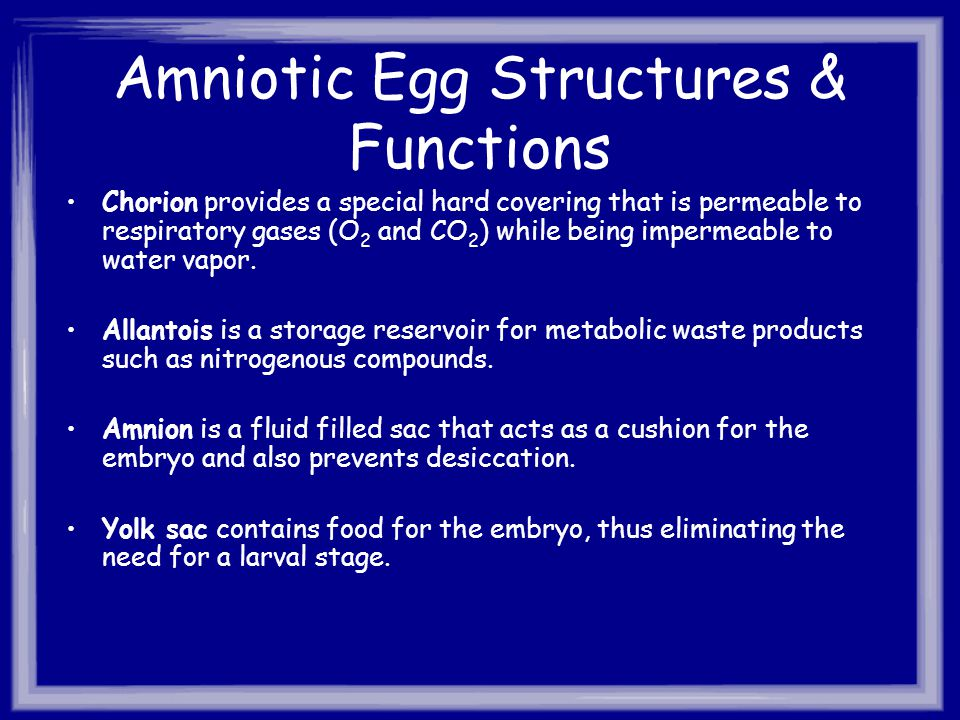 Amniotic Egg Structures & Functions