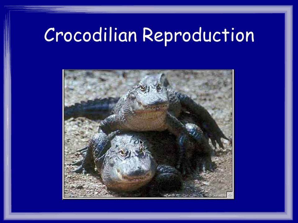 Crocodilian Reproduction