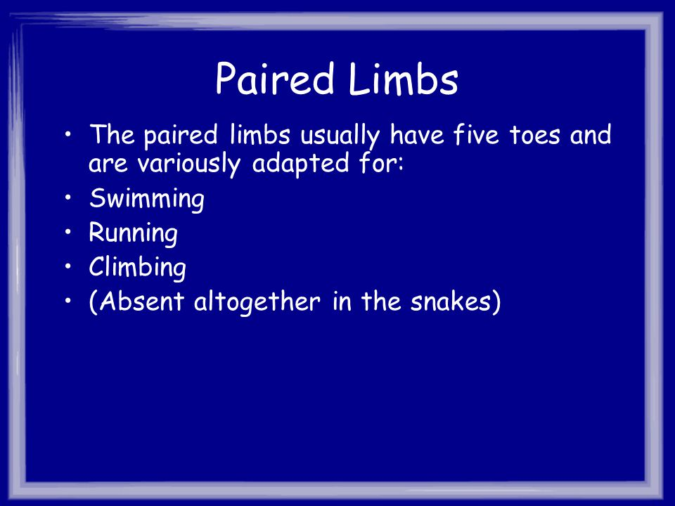 Paired Limbs The paired limbs usually have five toes and are variously adapted for: Swimming. Running.