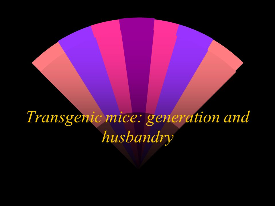 Transgenic mice: generation and husbandry