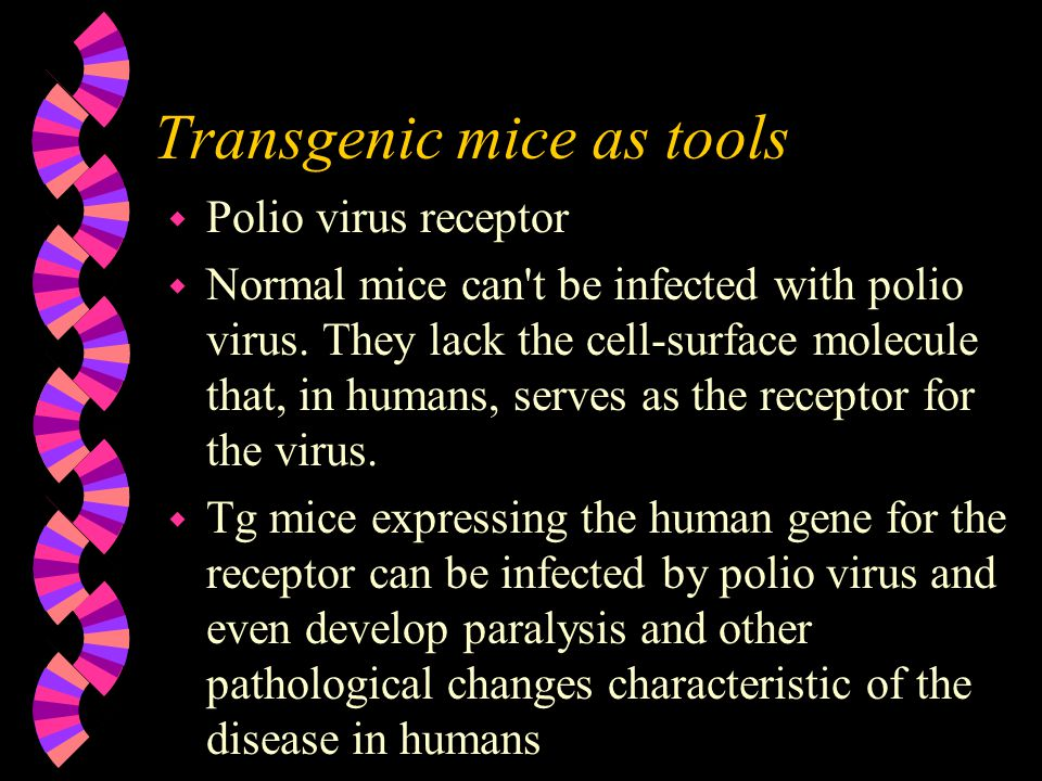 Transgenic mice as tools