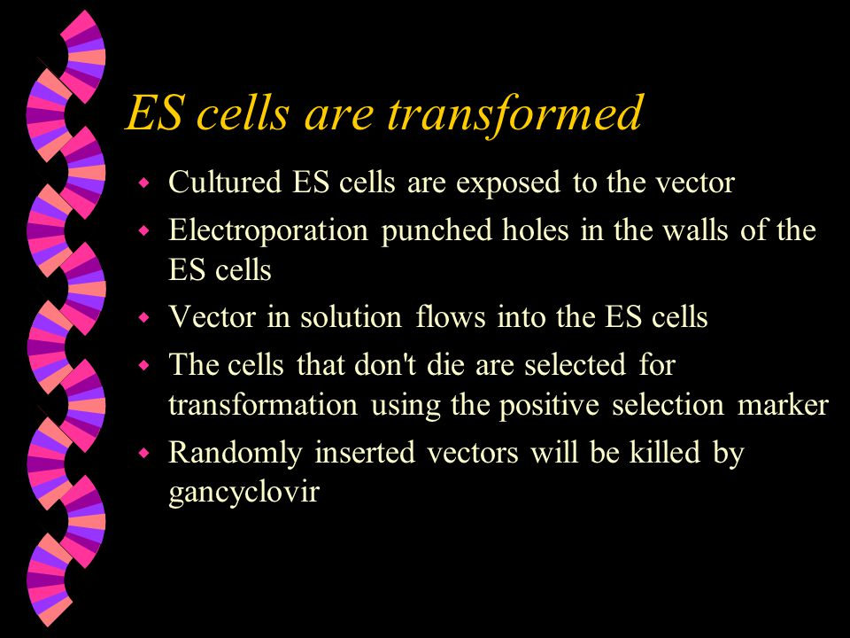 ES cells are transformed