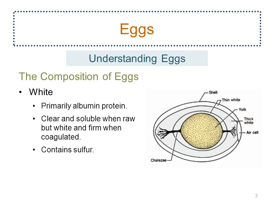 Eggs Understanding Eggs The Composition of Eggs White