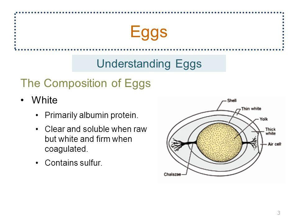 Eggs Understanding Eggs The Composition of Eggs White