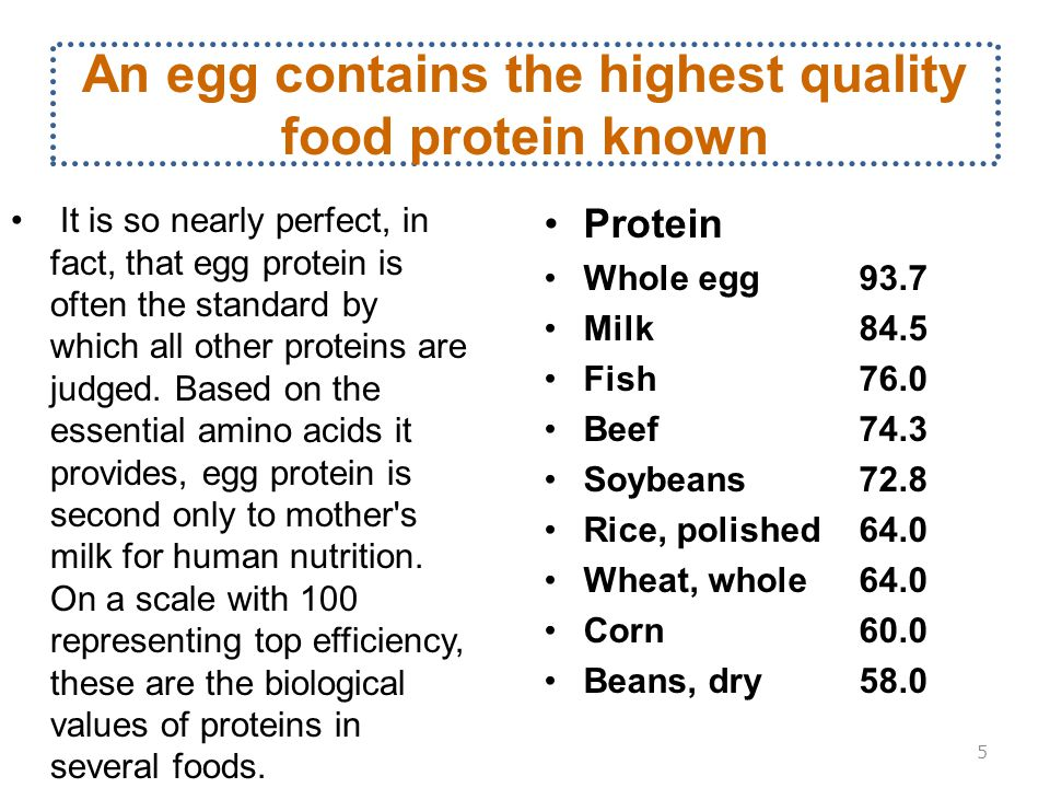 An egg contains the highest quality food protein known