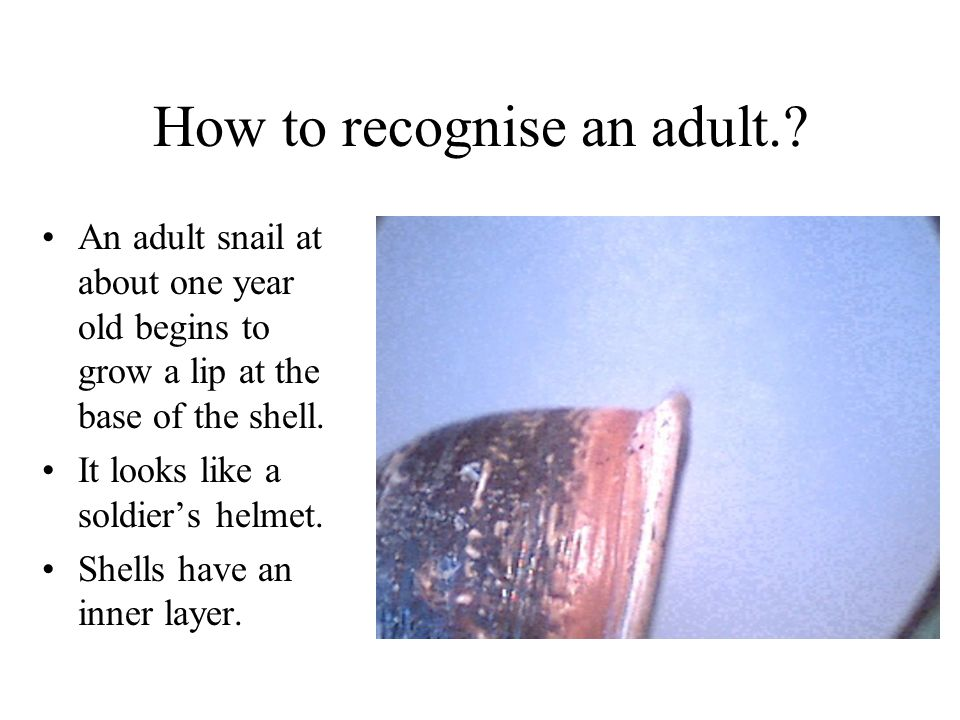 How to recognise an adult.