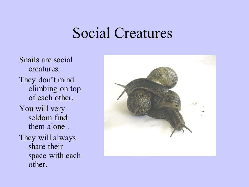Social Creatures Snails are social creatures.