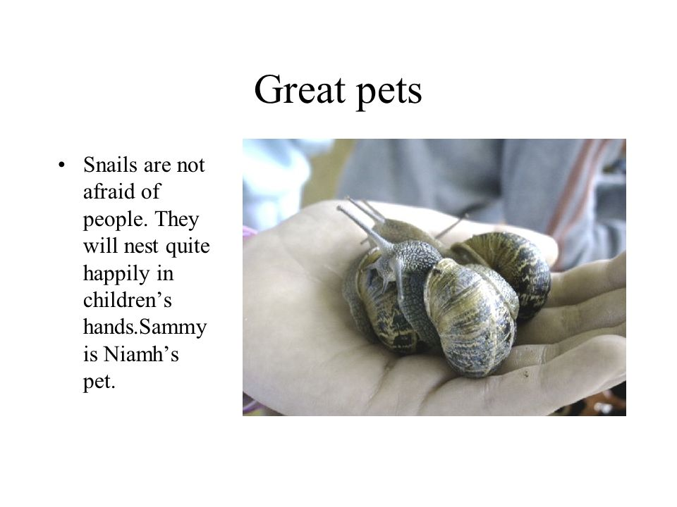 Great pets Snails are not afraid of people.
