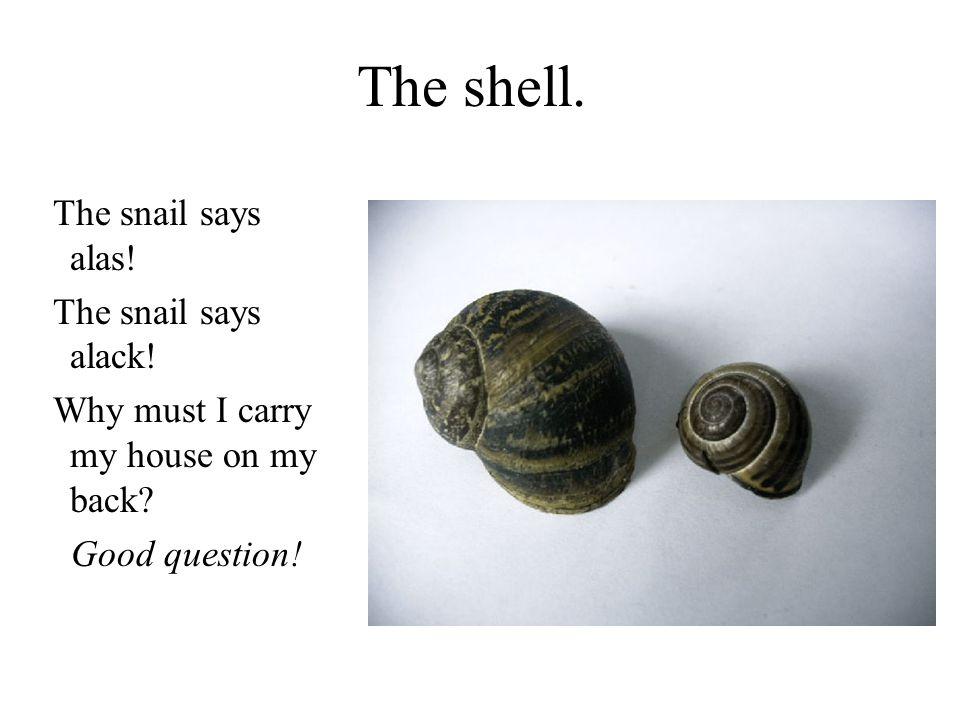 The shell. The snail says alas! The snail says alack!