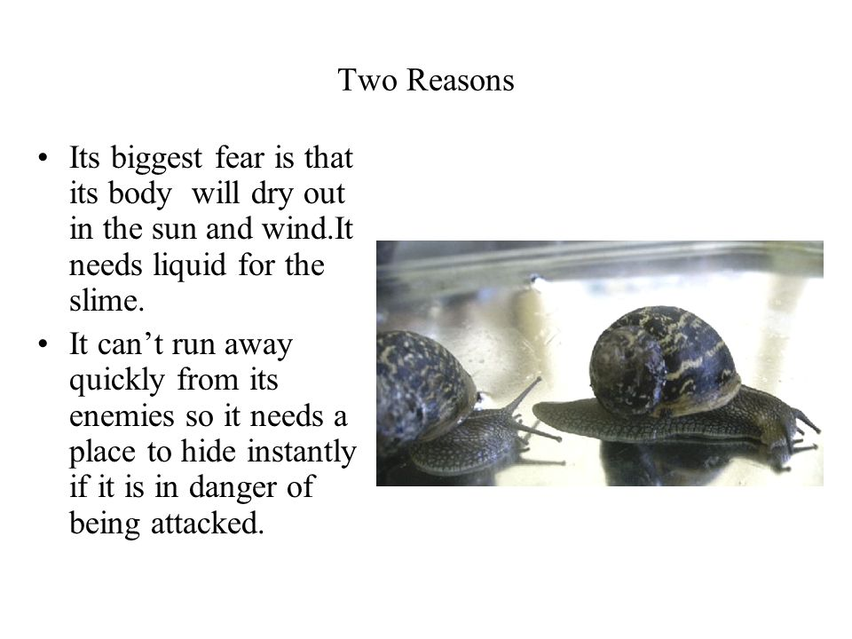 Two Reasons Its biggest fear is that its body will dry out in the sun and wind.It needs liquid for the slime.