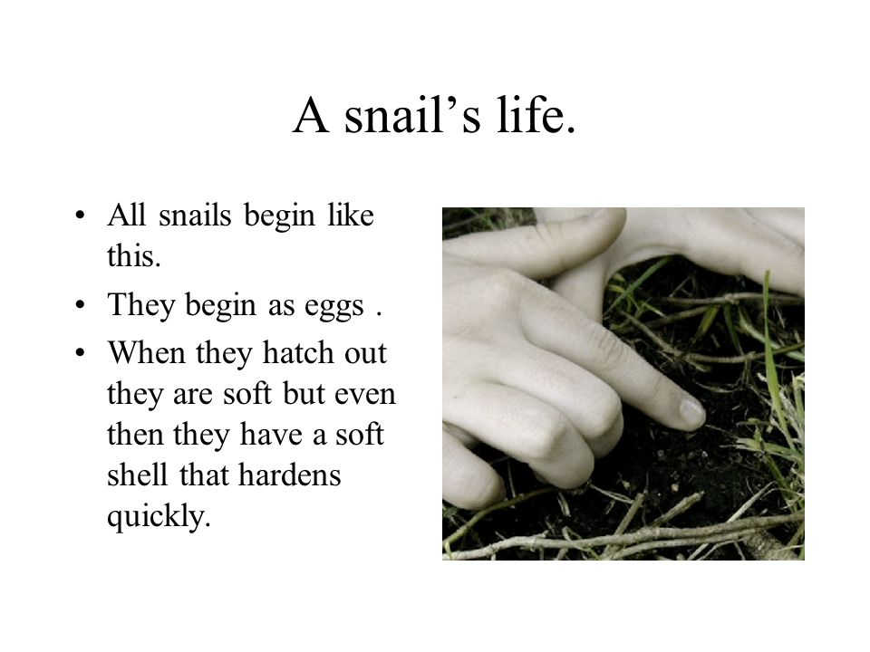 A snail's life. All snails begin like this. They begin as eggs .