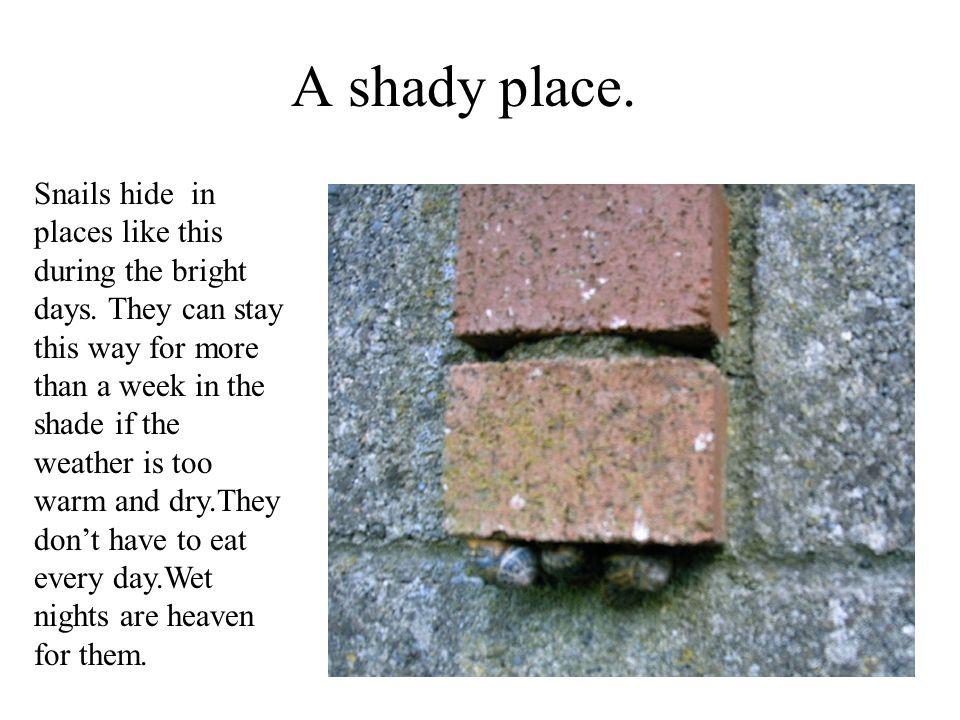 A shady place.