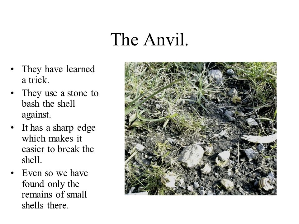 The Anvil. They have learned a trick.
