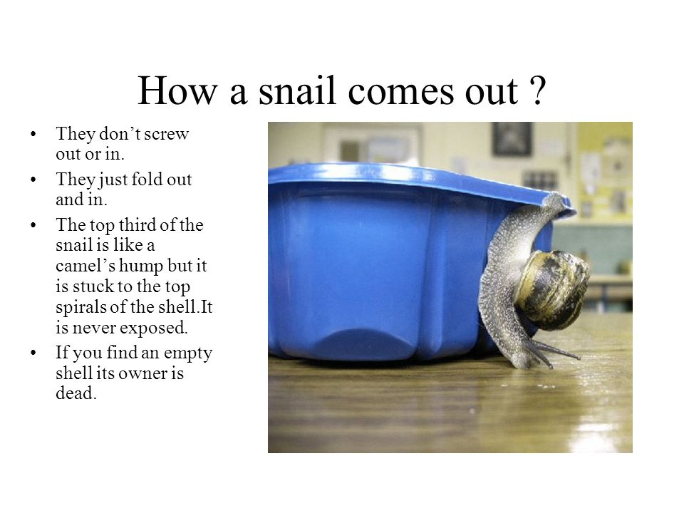 How a snail comes out They don't screw out or in.