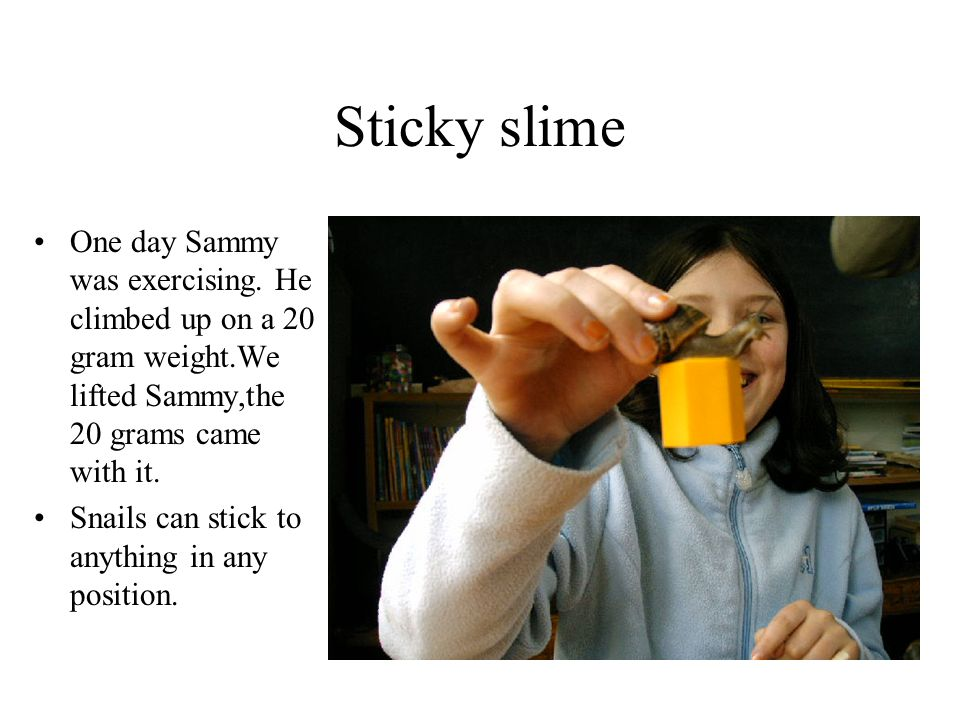 Sticky slime One day Sammy was exercising. He climbed up on a 20 gram weight.We lifted Sammy,the 20 grams came with it.