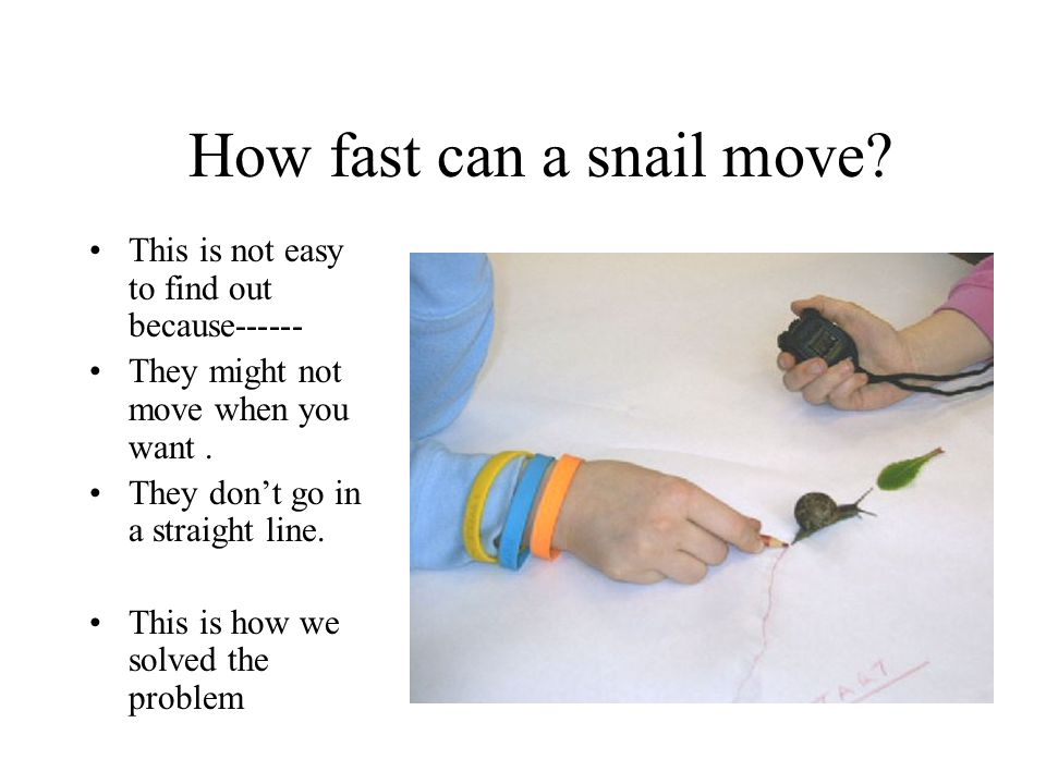How fast can a snail move