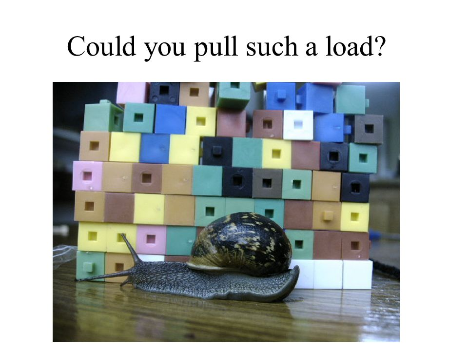 Could you pull such a load