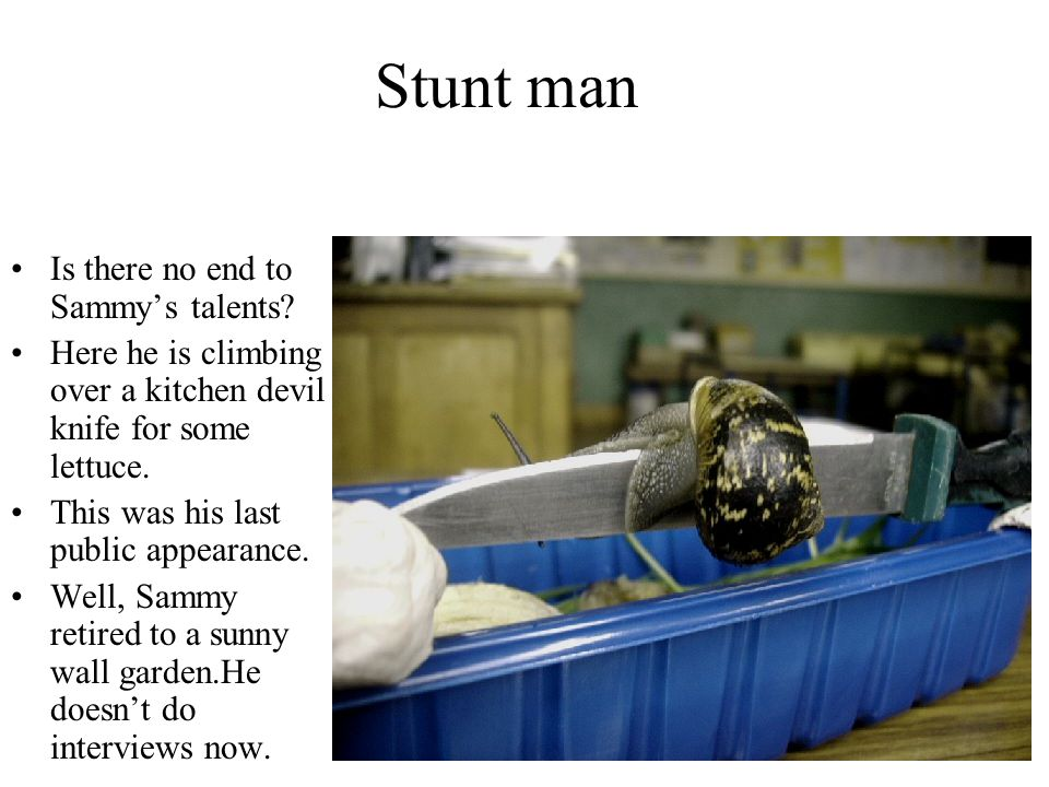 Stunt man Is there no end to Sammy's talents