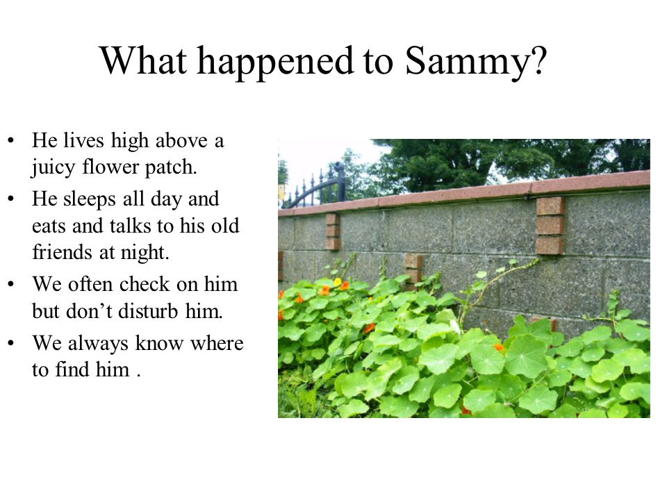 What happened to Sammy He lives high above a juicy flower patch.