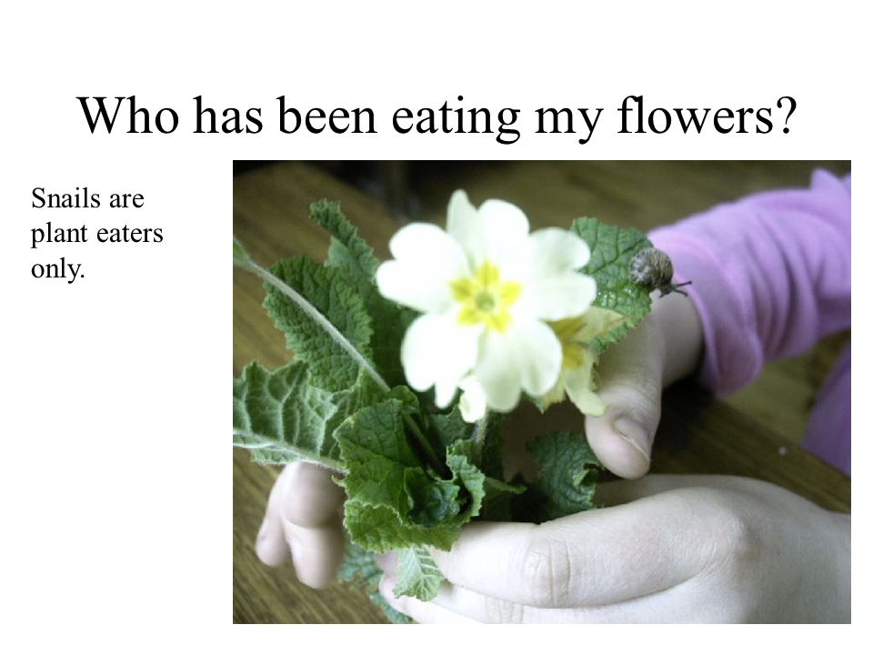 Who has been eating my flowers