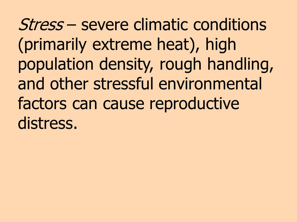 Stress – severe climatic conditions (primarily extreme heat), high population density, rough handling, and other stressful environmental factors can cause reproductive distress.