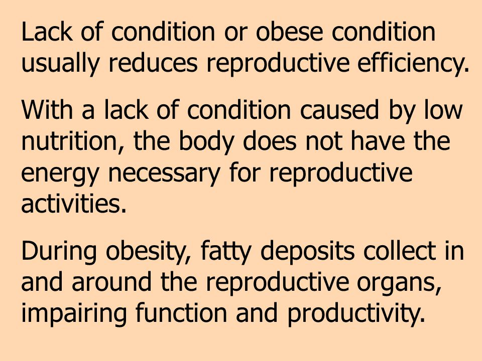 Lack of condition or obese condition usually reduces reproductive efficiency.