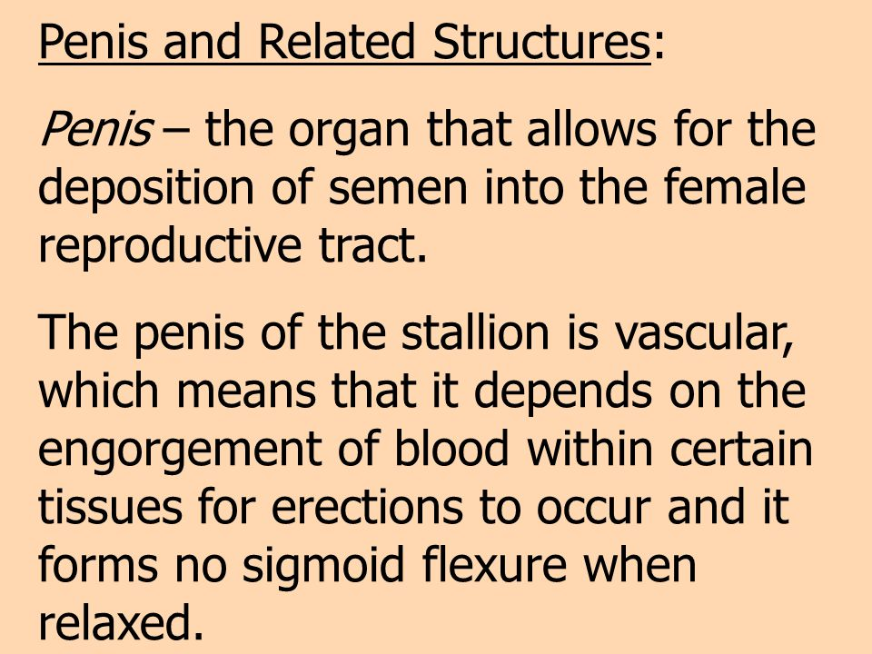 Penis and Related Structures: