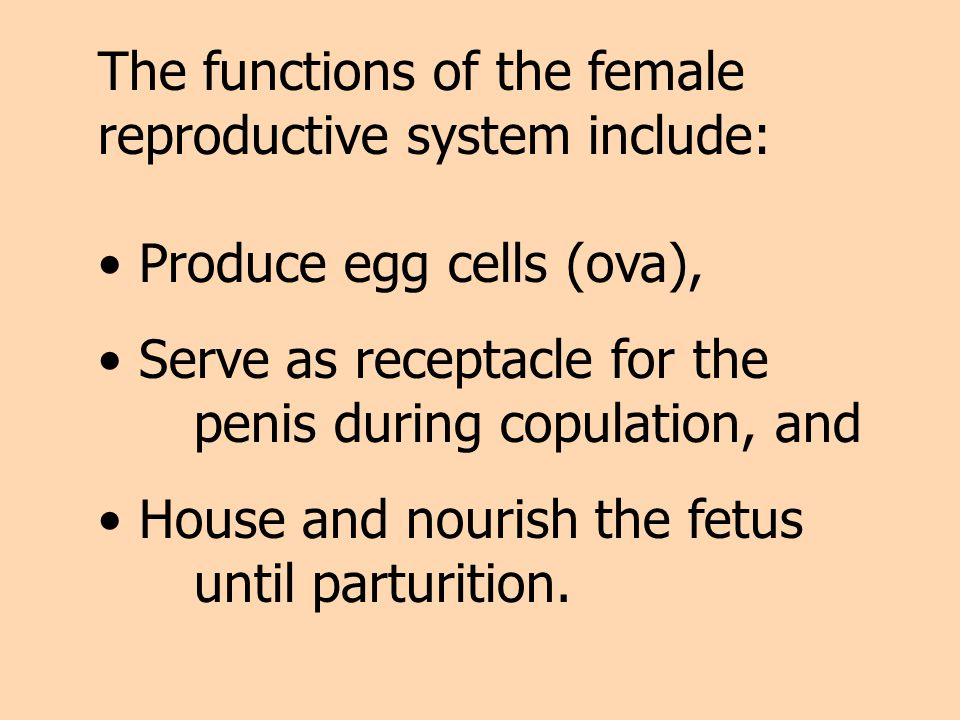 The functions of the female reproductive system include: