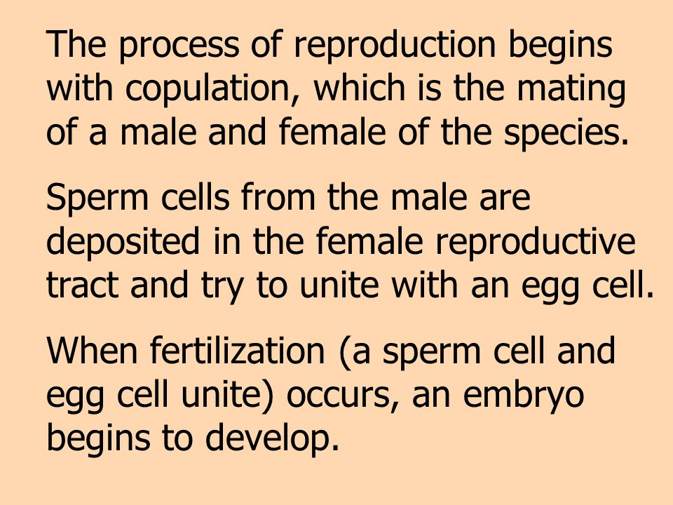 The process of reproduction begins with copulation, which is the mating of a male and female of the species.