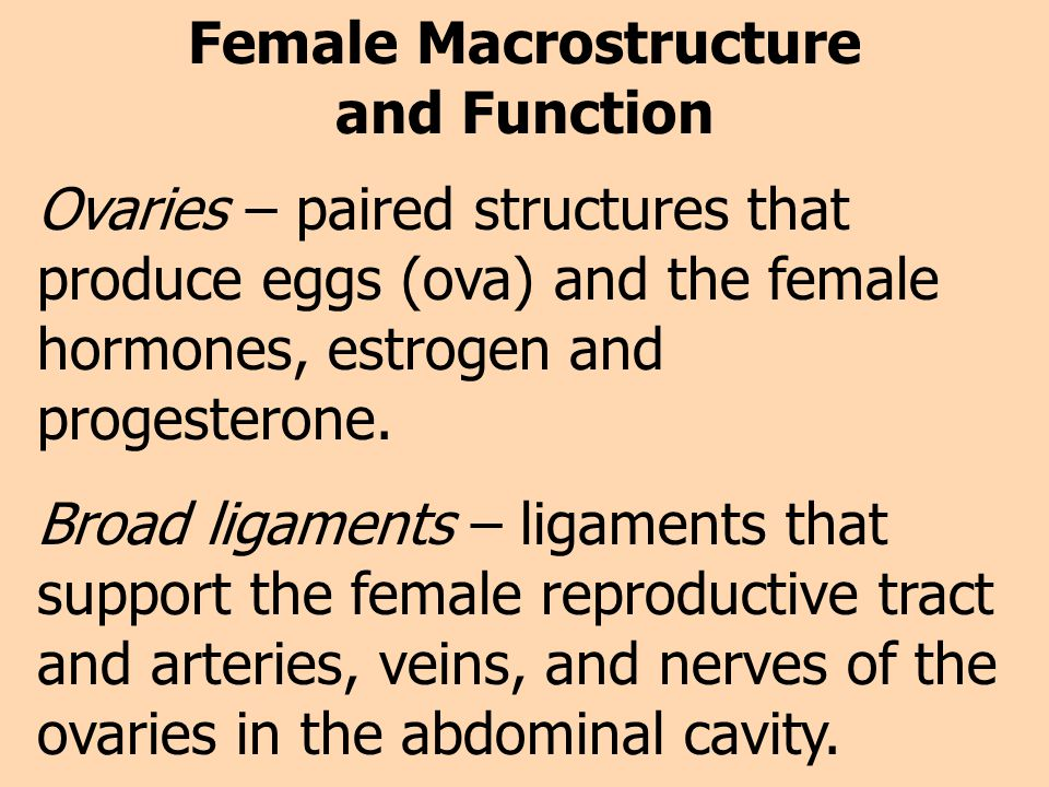 Female Macrostructure and Function