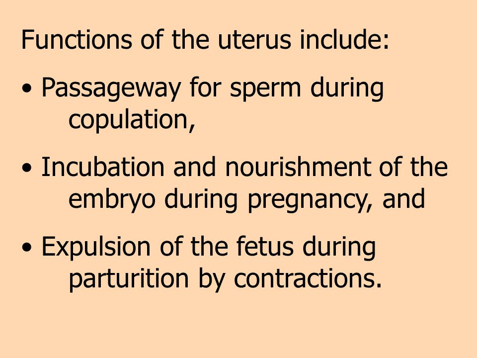 Functions of the uterus include: