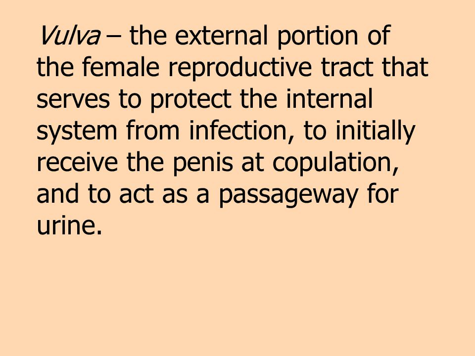 Vulva – the external portion of the female reproductive tract that serves to protect the internal system from infection, to initially receive the penis at copulation, and to act as a passageway for urine.