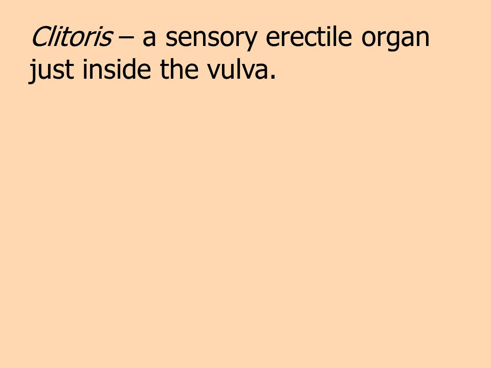 Clitoris – a sensory erectile organ just inside the vulva.