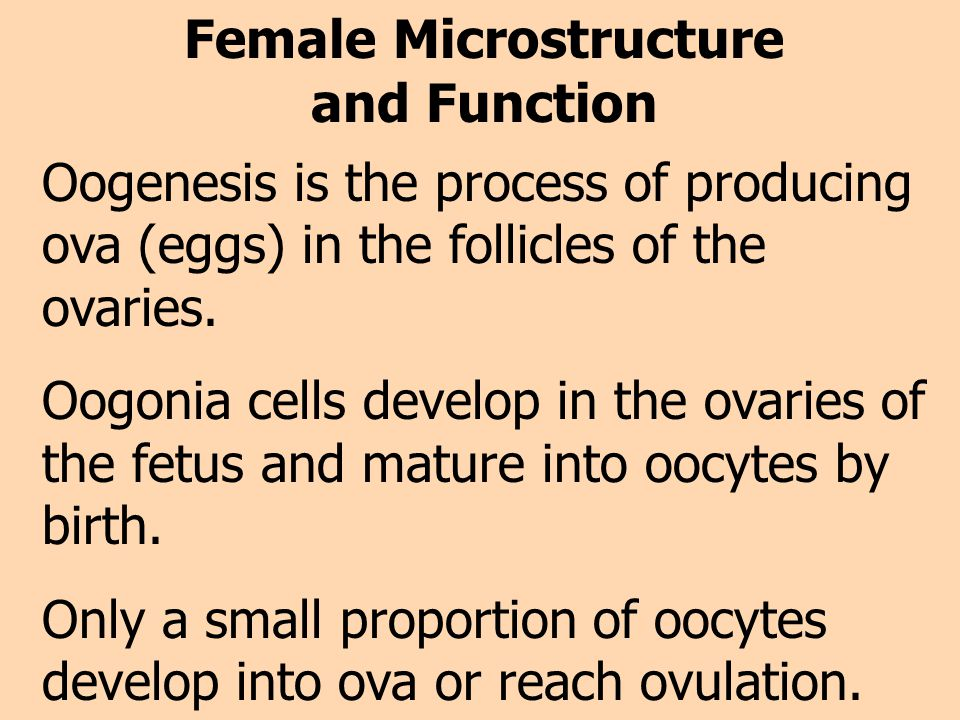 Female Microstructure and Function