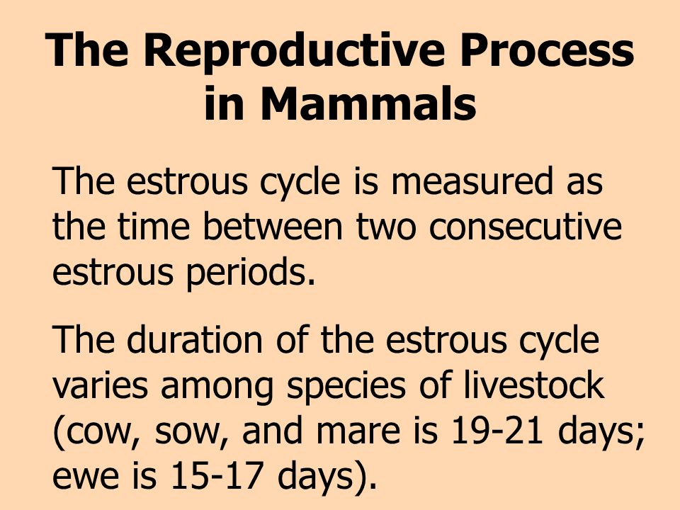 The Reproductive Process in Mammals