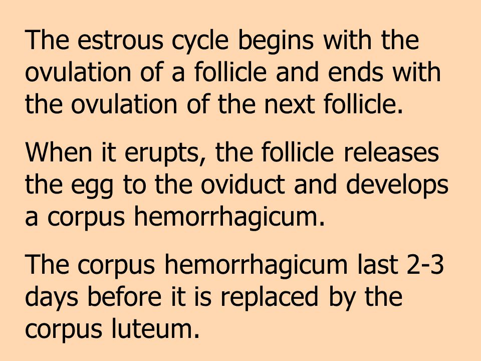 The estrous cycle begins with the ovulation of a follicle and ends with the ovulation of the next follicle.