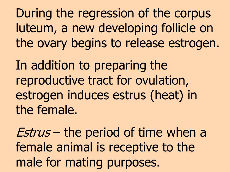 During the regression of the corpus luteum, a new developing follicle on the ovary begins to release estrogen.