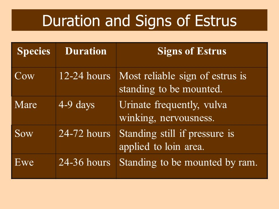 Duration and Signs of Estrus