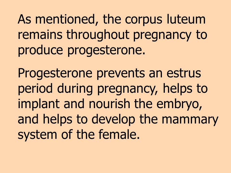 As mentioned, the corpus luteum remains throughout pregnancy to produce progesterone.