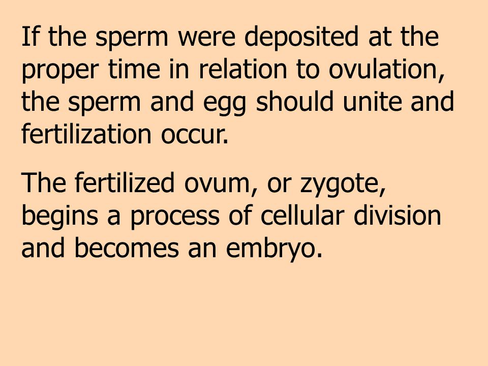 If the sperm were deposited at the proper time in relation to ovulation, the sperm and egg should unite and fertilization occur.
