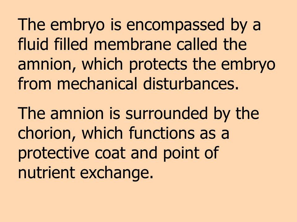 The embryo is encompassed by a fluid filled membrane called the amnion, which protects the embryo from mechanical disturbances.