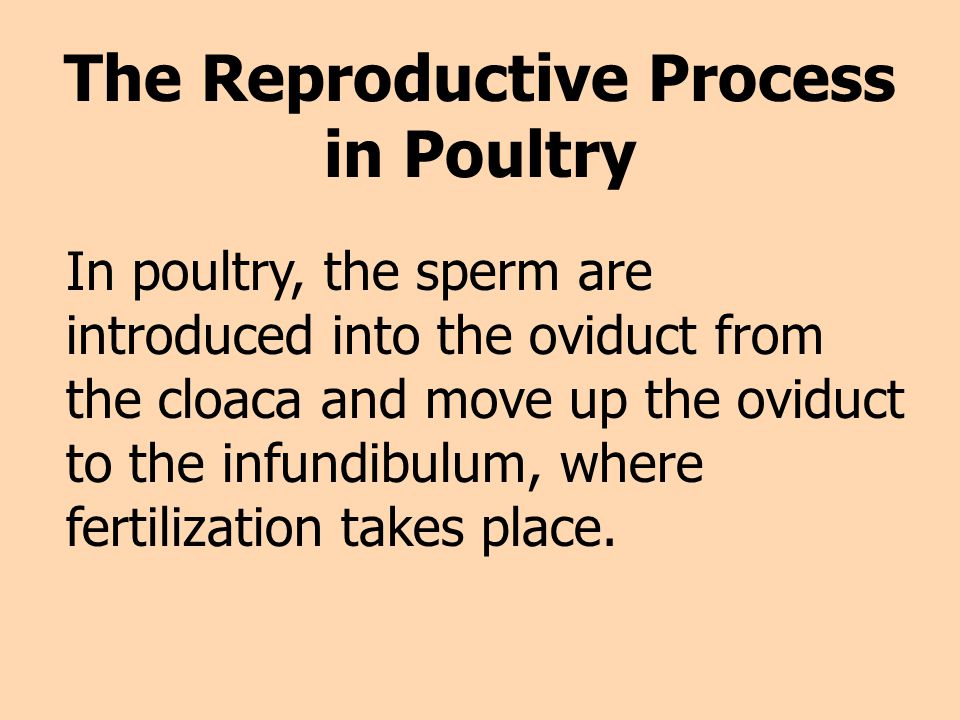 The Reproductive Process in Poultry