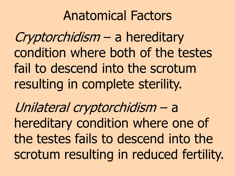 Anatomical Factors Cryptorchidism – a hereditary condition where both of the testes fail to descend into the scrotum resulting in complete sterility.