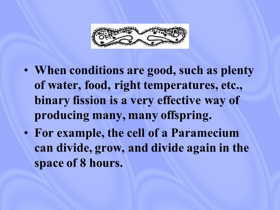 When conditions are good, such as plenty of water, food, right temperatures, etc., binary fission is a very effective way of producing many, many offspring.