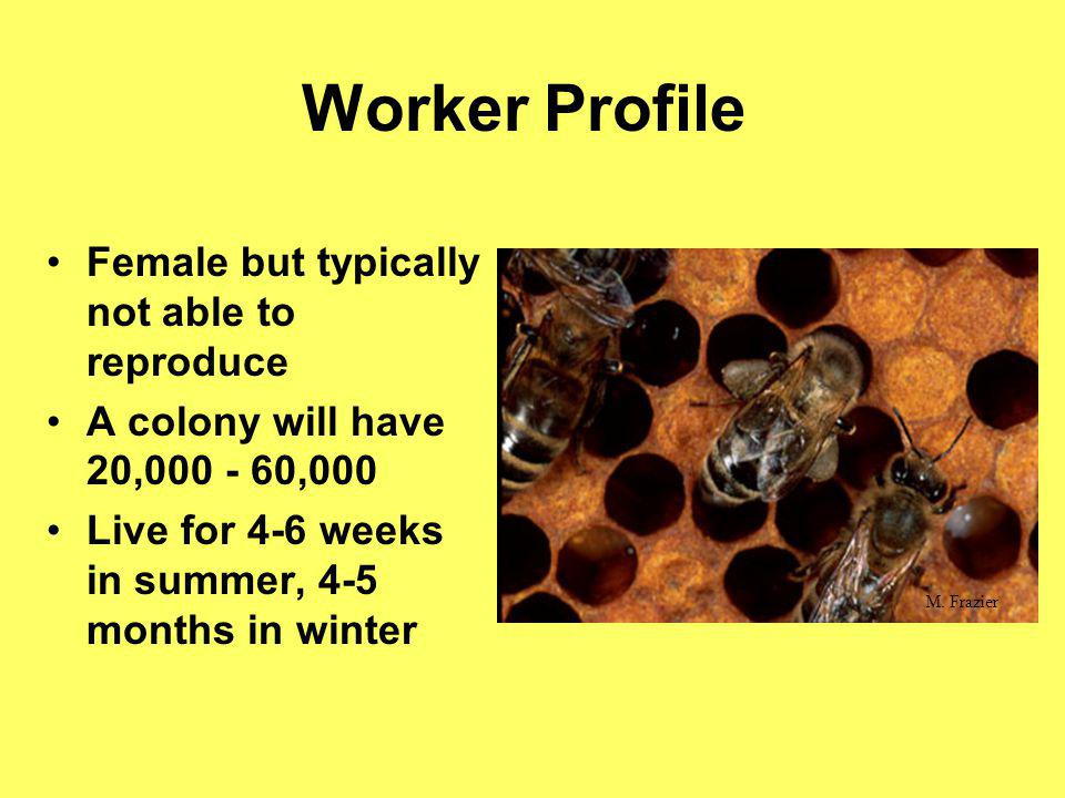 Worker Profile Female but typically not able to reproduce