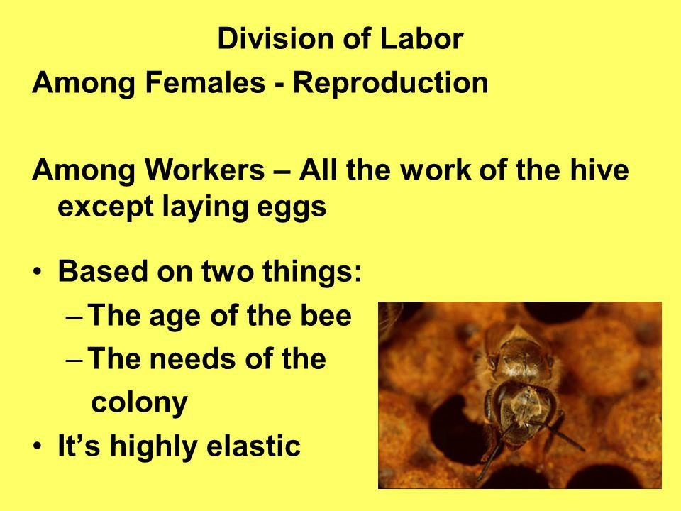 Among Females - Reproduction