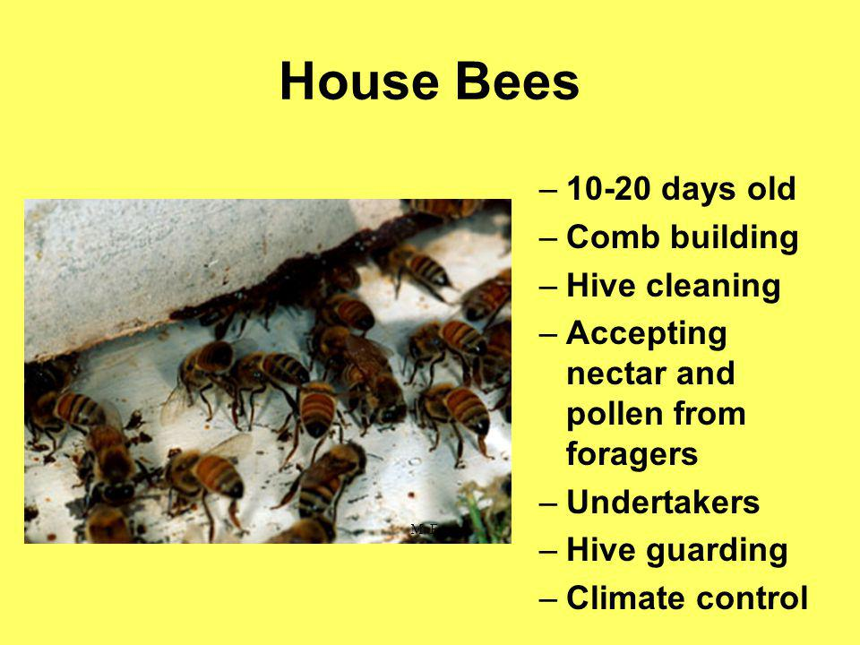 House Bees 10-20 days old Comb building Hive cleaning