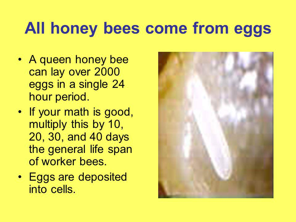 All honey bees come from eggs